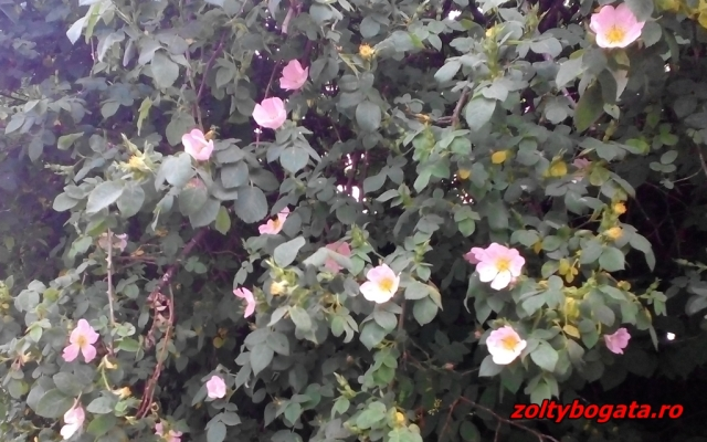 IMG_20150522_194945
